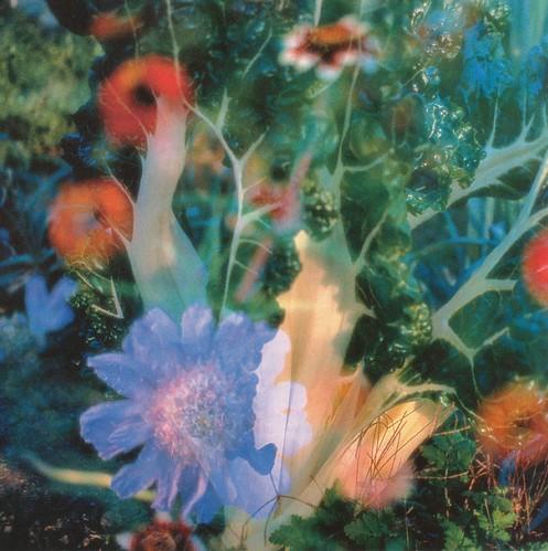 Peter Fischli und David Weiss, Projektion 3 (Flowers), Ausschnitt by HEN-Magonza