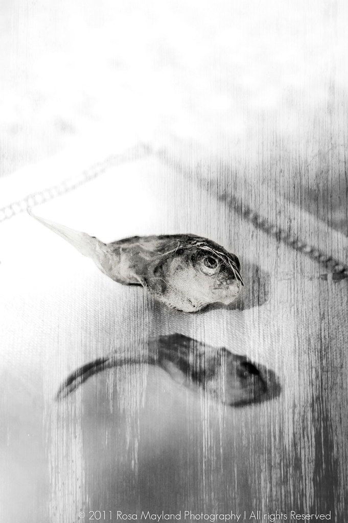 Dried fishes B&W 1 4 bis