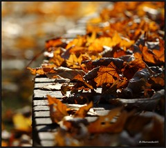 Leaves on a wall (bernd obervossbeck) Tags: autumn leaves leaf herbst blatt bltter mygearandme mygearandmepremium