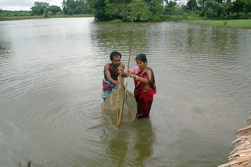Netting fish in a pond, Bangladesh. Photo by WorldFish, 2008