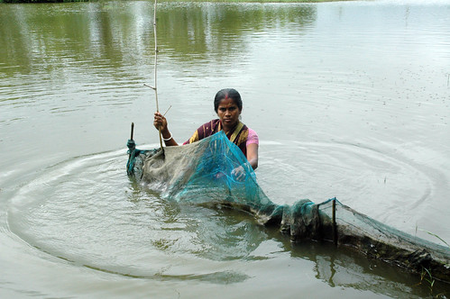 Woman fencing a pond, Bangladesh. Photo by WorldFish, 2008