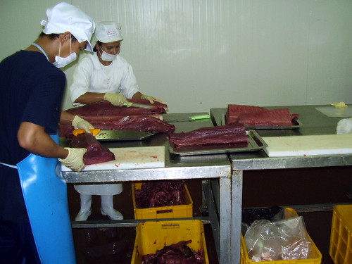 Tuna fish processing, Malaysia. Photo by Fred Weirowsky, 2005