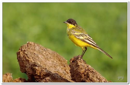 Hay Birdy!! by Yogendra174