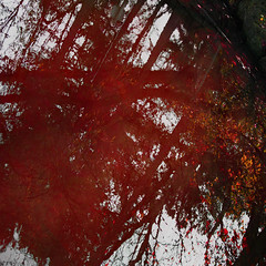 Red Tree Reflection (Tim Noonan) Tags: digital photoshop angle autumn trees pond reflection red white awardtree trolledproud vivid imagination sotn art manipulation shockofthenew vividimagination maxfudgeexcellence maxfudge exoticimage hypothetical netartii maxfudgeawardandexcellencegroup magiktroll ultramodern
