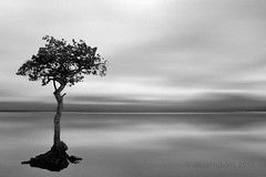 Its that tree again (Ali -1963) Tags: tree scotland nikon lochlomond lonetree d5000 milarrochybay alisonroberts