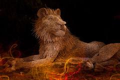 little lion man (mark silva) Tags: lightpainting nocturnal sydney australia nsw paintingwithlight sculpturebythesea bondibeach nocturne sbs nocturnes sbts sculpturebythesea2011