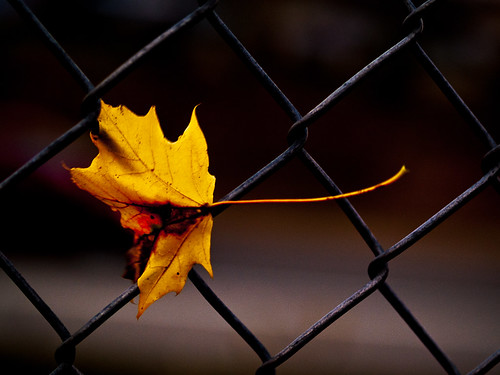 The Last Leaf of Fall