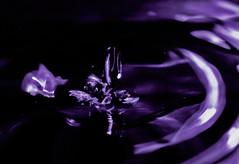 Abstracto (Fotografia David Ortega) Tags: gota abstracto morado abstraccion davidortega