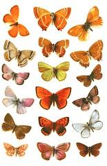 18butterflies