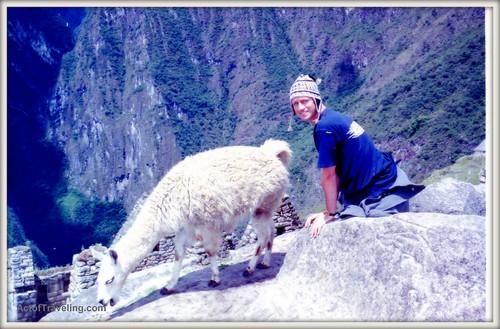 Emiel and llama in Machu Picchu