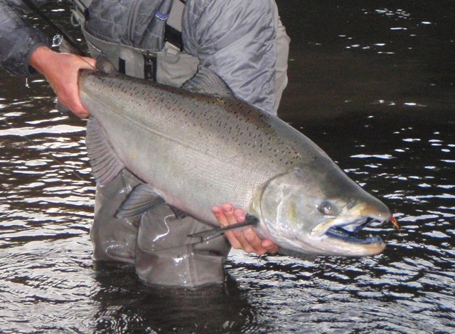 Rob Russell, Fall Chinook photos
