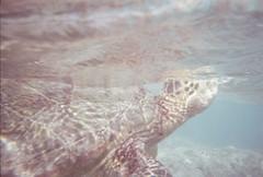 (Adam Machado) Tags: hawaii oahu honolulu hanaumabay seaturtle