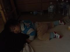 妻は病院、私は皿洗い。とらちゃんは勝手に布団に行って寝てた。 (2011/11/12)