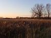 Golden Asylum (bill.d) Tags: november sun tree field grass michigan unitedstatesofamerica kalamazoo goldenhour adobecameraraw asylumlake chdk a590is nikviveza topazinfocus