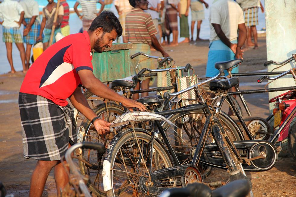 Jaffna Fish Market
