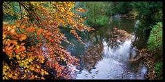 River Witham (tina negus) Tags: autumn river landscape lincolnshire beech witham belton