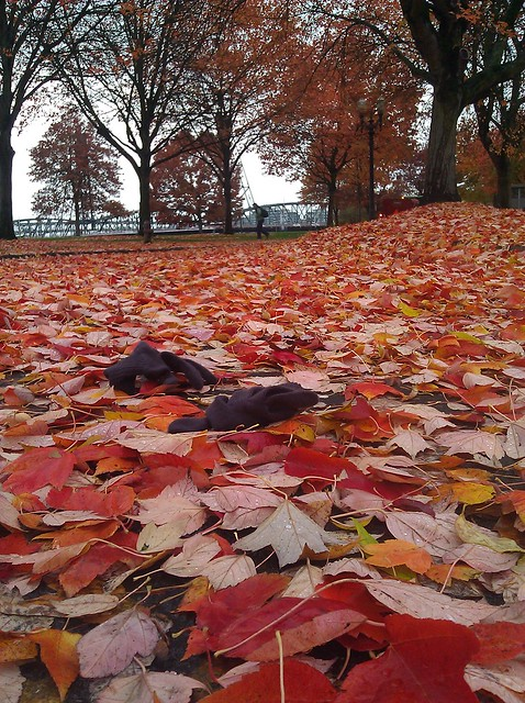 A pair of purple gloves lying in a field of fallen red and orange sycamore leaves in Waterfront Park, Portland Oregon