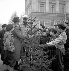 Kpslag om julgran (Lnsmuseet Gvleborg) Tags: christmas old blackandwhite bw photos sweden gvle jul 1945 foton gamla svartvitt gefle carllarsson julgransmarknad
