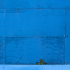 natdeco (barbera*) Tags: blue 2 plant detail london wall minimal weathered plywood barbera 500x500 9862a