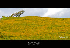 Vineyards (RohcNem) Tags: california northerncalifornia winery vineyards valley grapes napa landscapephotography