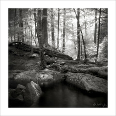 (Mark Magin) Tags: trees blackandwhite 6x6 film water mediumformat newhampshire whitemountains cascades infrared streams ilford efke id11 ir820 visionqualitygroup
