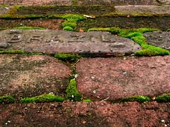 brazil (aimeeern) Tags: school brazil brick canon moss michigan powershot challenge berriensprings hinchman oronoko s5is hinchmanschool ourdailychallenge