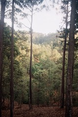 Michoacn (Aleksis Marin) Tags: naturaleza film nature forest 35mm mexico bosque pelicula michoacan om1n plnka