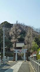 熊野神社市民の森(杉山神社)(Kumano Shrine Community Woods)