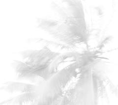 Tropical? (pedrobiondi) Tags: light white tree luz branco effects moving movement exposure coconut lumire over super movimiento coco overexposed movimento overexposure fx efeitos bianco blanc brightness luce mouvement coqueiro exposio brilho brillo hiper effets superexposio efectos effetti effetto luminosit superexposure luminosit superexposta hyperexposure hiperexposio hiperexposta