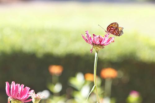 Hodges Garden - Butterfly