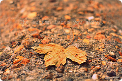 Autumn Leaf (Yavanna Warman {off}) Tags: autumn red orange game fall hoja leaves canon hojas eos 50mm leaf rojo focus rocks dof seasons bokeh stones collection otoo f18 juego ideas naranja piedras fallenleaves coleccin fallcollection estaciones hojaseca milde hojascaidas yavanna 1000d yavannawarman ideasdenoviembre