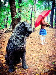 (joyrex) Tags: dog colors umbrella kid woods nederland thenetherlands vivid hond kai bos bouvier paraplu kleur huijbergen