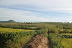 Potato Mound near Nampo North Korea