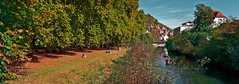 Autumn Impression of Tbingen (KF-Photo) Tags: autumn relax herbst neckar allee tbingen ausruhen platanenallee