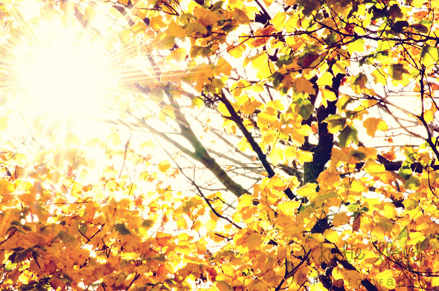 Autumn-Leaves-and-Starburst