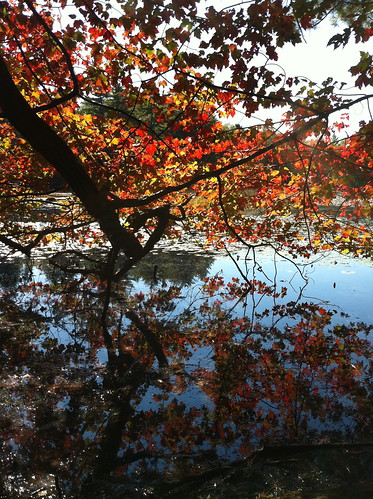 fall foliage reflection