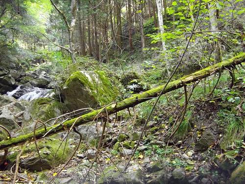 鈴木の滝 #2