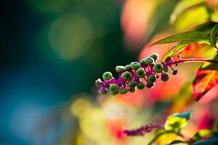 botanisch bunt