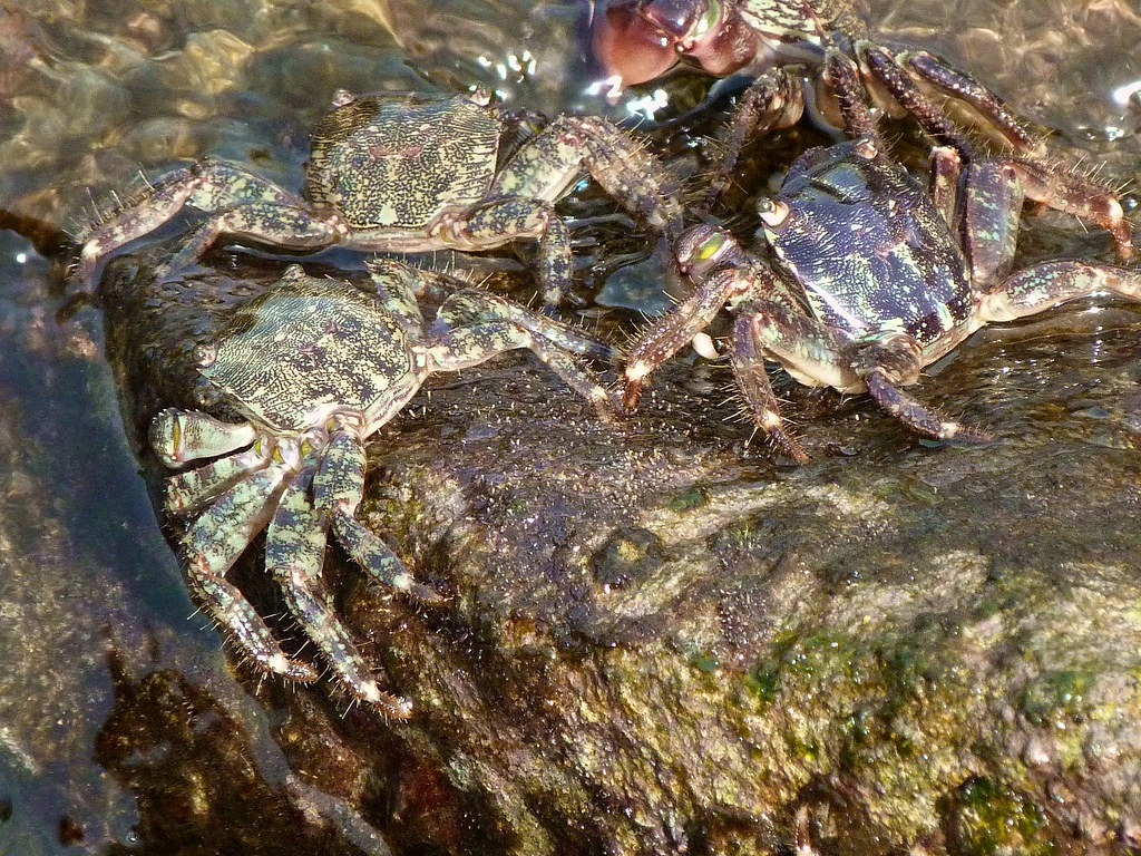 21-10-2011-crabs-on-crabhill