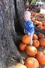 IMG_8932 (drjeeeol) Tags: tree pumpkin pumpkins will pumpkinpatch triplets toddlers fallfestival 2011 36monthsold painteroaksacademy
