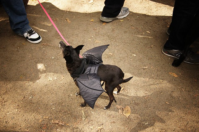 Bat,Halloween Dog Parade, Tompkins Square Park 2011 - East Village, New York City 36