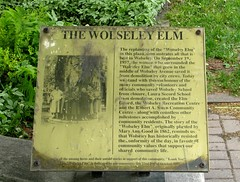 Wolseley Elm