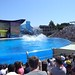 Sea World with SYR - 051