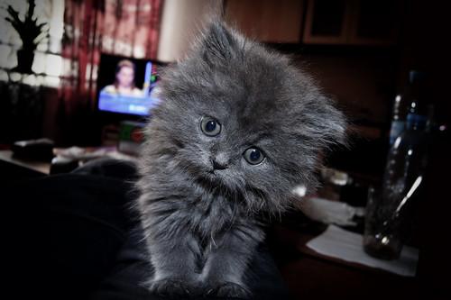 無料写真素材|動物|猫・ネコ|子猫・小猫