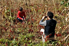 ret hot (Ian Riley [on the right side of the fence]) Tags: china field rural countryside asia chili metaphotography shanxi taigu