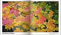 The Colours of Autumn (Anne Mancini-Smith) Tags: autumn red fall cemetery leaves yellow colours seasons seasonal norwich autumnal earlhamcemetery fujifilmfinepixs2950