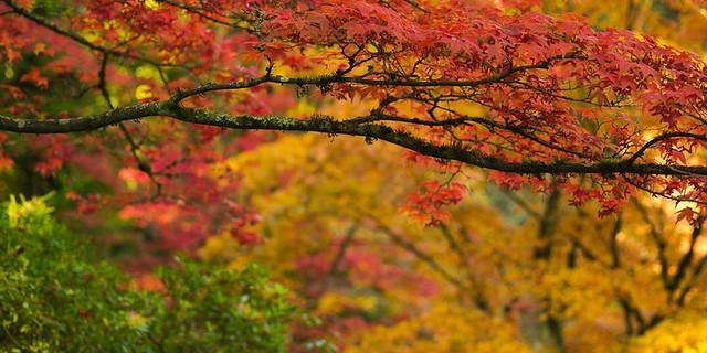 Japanese Gardens (1 of 3)
