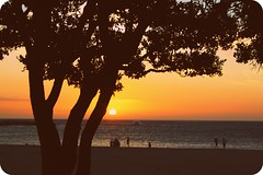 cape town evening (whats_ur_flava2000) Tags: trees light sunset sun love beach sunshine shine capetown sliders kapstadt hss