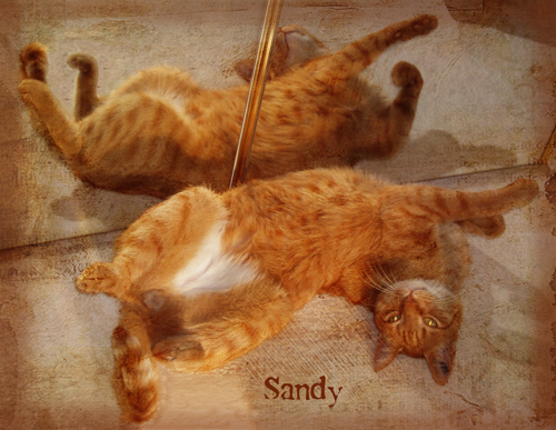 TT-number2-Sandy-web