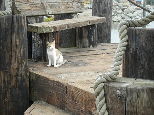 Feral Cat, Crescent City _ 6830